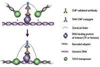 TAM-ChIP Assay Reagents