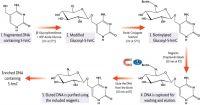 UDP-Azide-Glucose