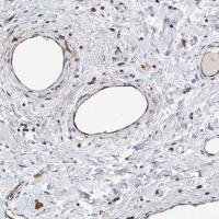 Immunohistochemical staining of human ep