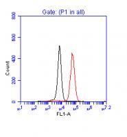 Flow Cytometrical Analysis of p53 in Jur