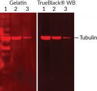 BT23013-T: TrueBlack® WB Blocking Buffer