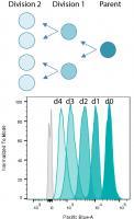 BT30068: ViaFluor® 405 SE Cell Prolifera