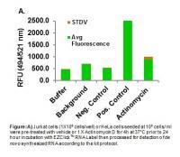 EZClick™ Global RNA Synthesis Assay Kit