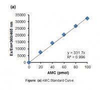 Fatty Acid Amide Hydrolase (FAAH) Activi