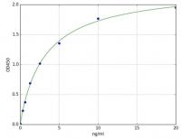 Glycogen Synthase Kinase (GSK) (Mouse) E