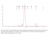Human CellExp™ sRANK Ligand, Human Recom