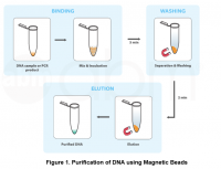 Magnetic Beads for DNA Purification
