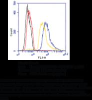 CAY14267-1 ea: GPR12 (N-Term) Polyclonal