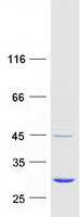 Coomassie blue staining of purified EMC9