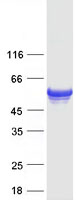 Coomassie blue staining of purified FLAD