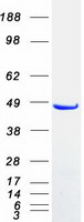 Coomassie blue staining of purified SNX5
