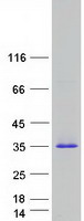 Coomassie blue staining of purified PRG3