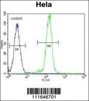 AKT2 Antibody (N-term) (Cat. #TA302204)