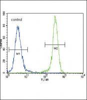 E Cadherin (CDH1) Antibody (C-term) (Cat
