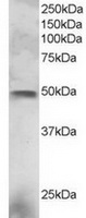 TA302473 staining (3ug/ml) of NCI-H460 l
