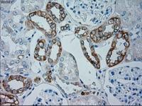 Immunohistochemical staining of paraffin