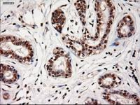 Immunohistochemical staining of paraffin