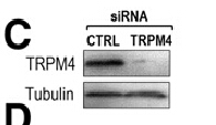 Figure from citation: Western Blot of TR