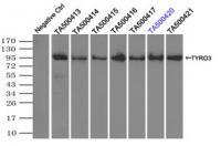 Immunoprecipitation (IP) of TYRO3 by usi