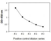 Positive Control: NIH3T3 cells were trea